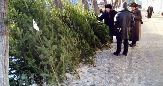 Цена новогодней елки в Киеве