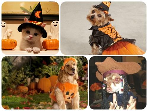 Костюмы для животных на Хэллоуин