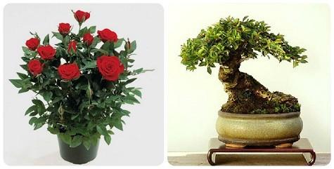 Цветы в горшочках в подарок на 8 марта
