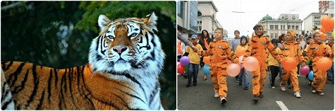 Международный день тигра